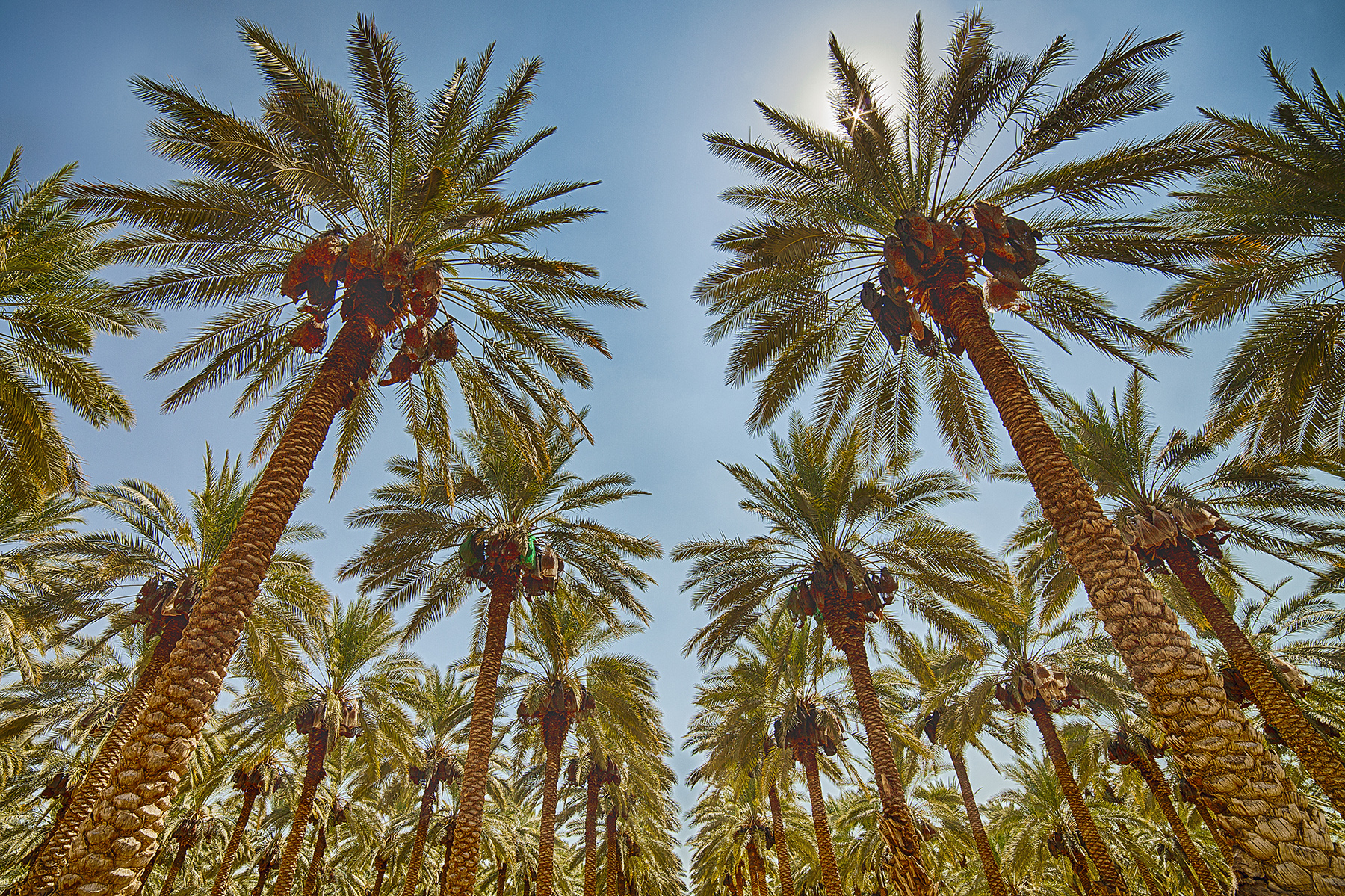 The Palms of Palestine 2014