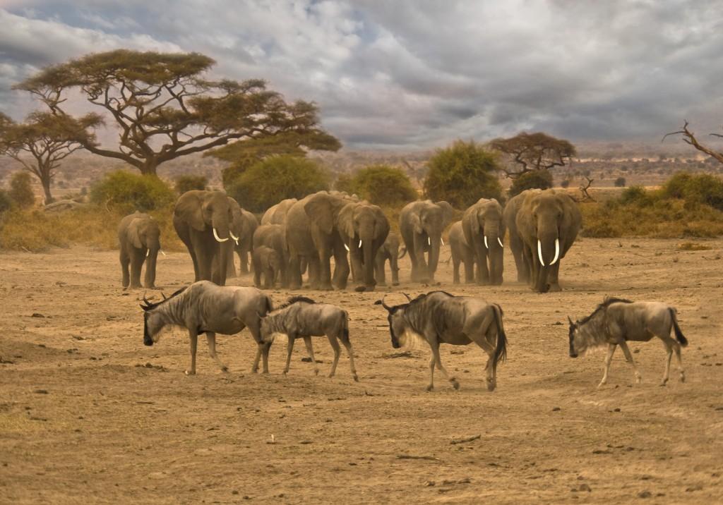 Kenya - Amboseli